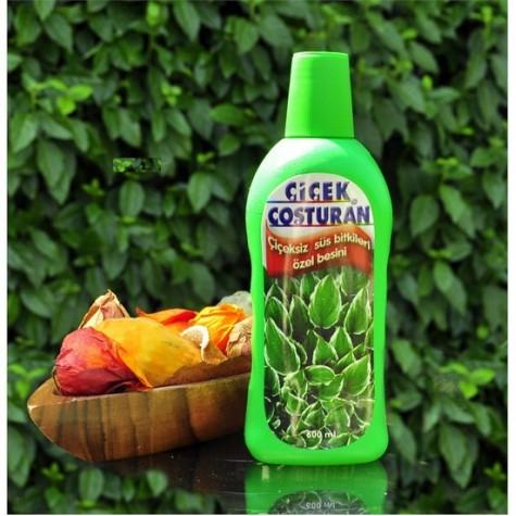 Çiçek Coşturan 1200 [Yeşil] - Çiçeksiz Süs Bitkileri İçin